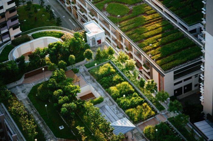 Zelená střecha jako cesta k čistšímu vzduchu
